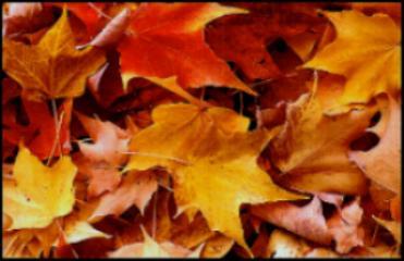 Cae el otoño...